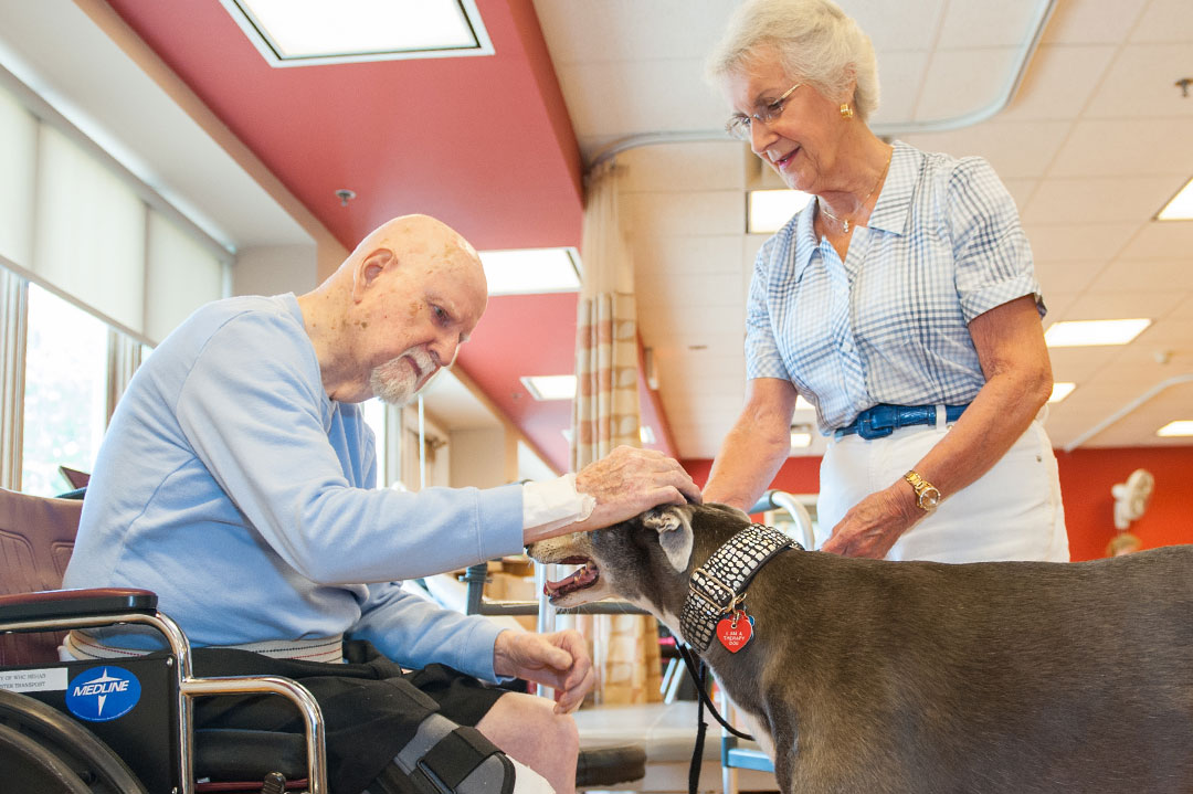 pets therapy dogs